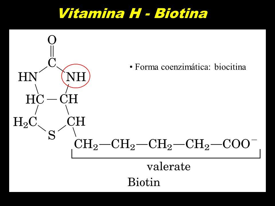 Vitamina H - Biotina Forma coenzimática: biocitina
