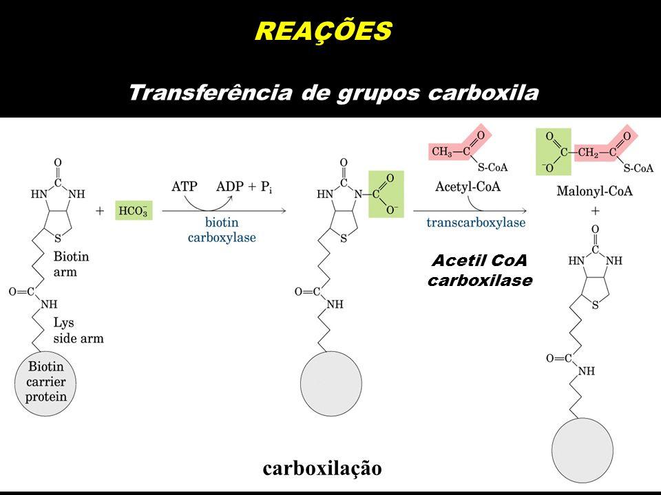 REAÇÕES Transferência de grupos carboxila carboxilação Acetil CoA carboxilase