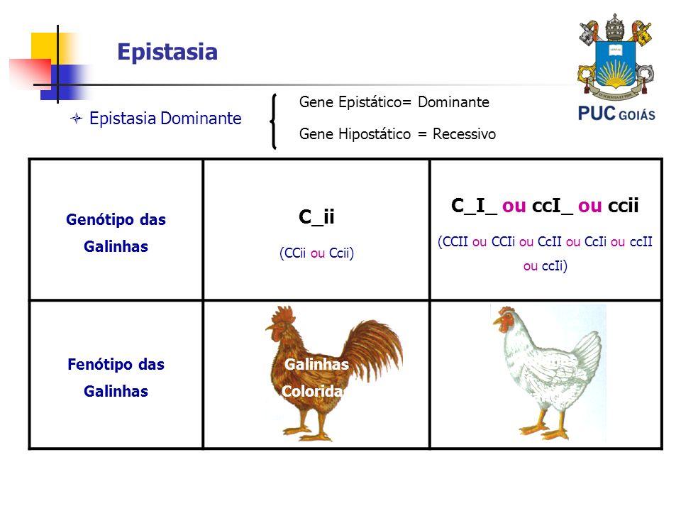 Epistasia Epistasia Dominante Genótipo das Galinhas C_ii (CCii ou Ccii) C_I_ ou ccI_ ou ccii (CCII ou CCIi ou CcII ou CcIi ou ccII ou ccIi) Fenótipo d
