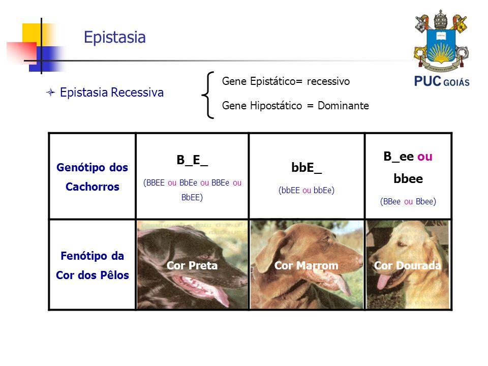 Epistasia Epistasia Recessiva Gene Epistático= recessivo Gene Hipostático = Dominante Genótipo dos Cachorros B_E_ (BBEE ou BbEe ou BBEe ou BbEE) bbE_