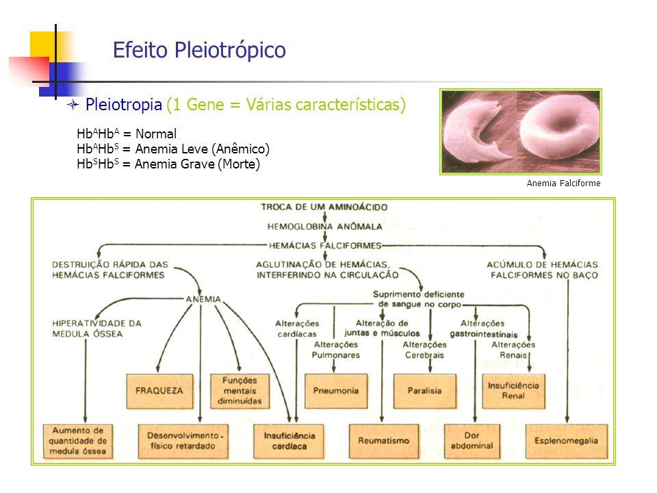 Efeito Pleiotrópico Pleiotropia (1 Gene = Várias características) Anemia Falciforme Hb A Hb A = Normal Hb A Hb S = Anemia Leve (Anêmico) Hb S Hb S = A