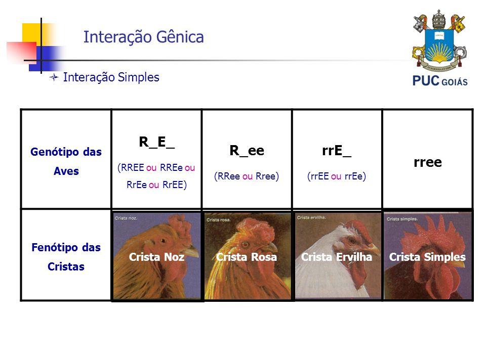 Interação Gênica Interação Simples Genótipo das Aves R_E_ (RREE ou RREe ou RrEe ou RrEE) R_ee (RRee ou Rree) rrE_ (rrEE ou rrEe) rree Fenótipo das Cri