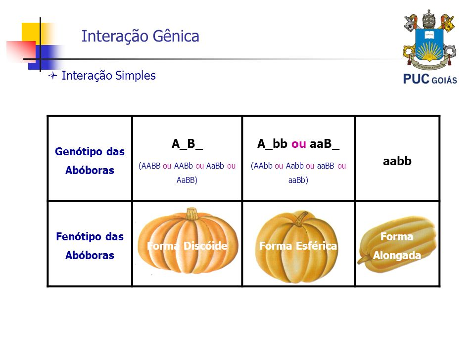 Interação Gênica Interação Simples Genótipo das Abóboras A_B_ (AABB ou AABb ou AaBb ou AaBB) A_bb ou aaB_ (AAbb ou Aabb ou aaBB ou aaBb) aabb Fenótipo