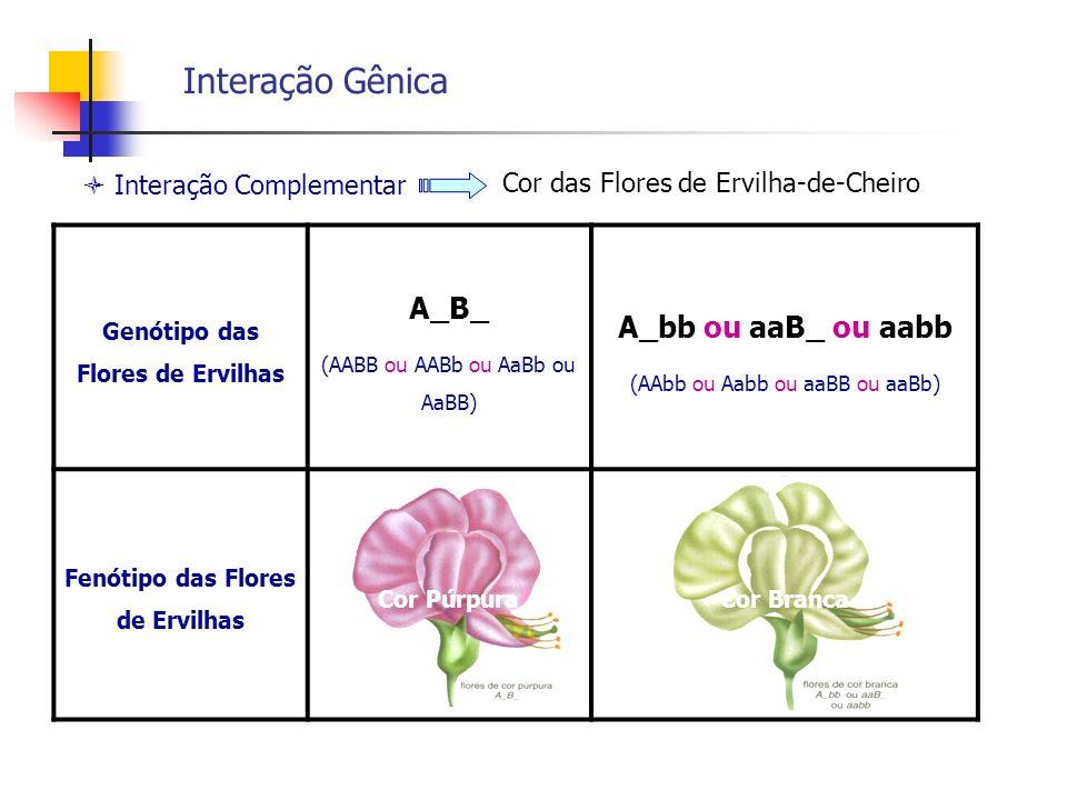 Interação Gênica Interação Complementar Genótipo das Flores de Ervilhas A_B_ (AABB ou AABb ou AaBb ou AaBB) A_bb ou aaB_ ou aabb (AAbb ou Aabb ou aaBB