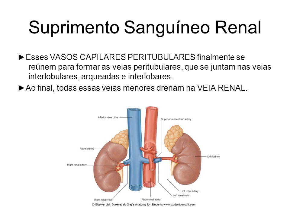 Suprimento Sanguíneo Renal Esses VASOS CAPILARES PERITUBULARES finalmente se reúnem para formar as veias peritubulares, que se juntam nas veias interlobulares, arqueadas e interlobares.