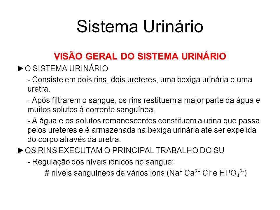 Sistema Urinário VISÃO GERAL DO SISTEMA URINÁRIO O SISTEMA URINÁRIO - Consiste em dois rins, dois ureteres, uma bexiga urinária e uma uretra.