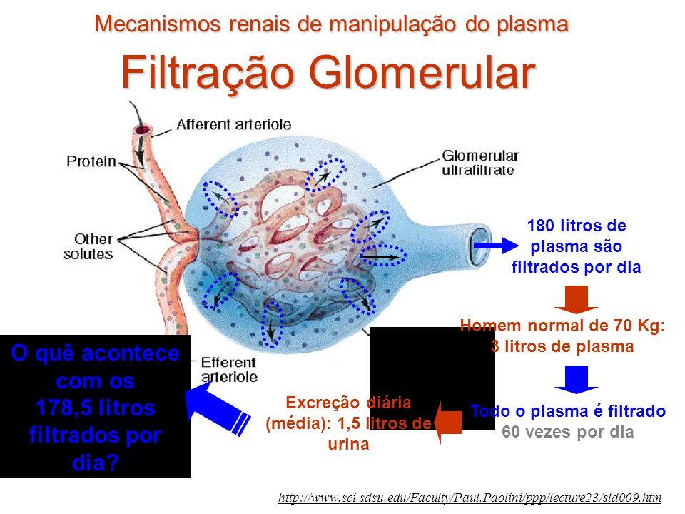 Mecanismos renais de manipulação do plasma http://www.sci.sdsu.edu/Faculty/Paul.Paolini/ppp/lecture23/sld009.htm Todo o plasma é filtrado 60 vezes por dia 180 litros de plasma são filtrados por dia Homem normal de 70 Kg: 3 litros de plasma Excreção diária (média): 1,5 litros de urina O quê acontece com os 178,5 litros filtrados por dia.