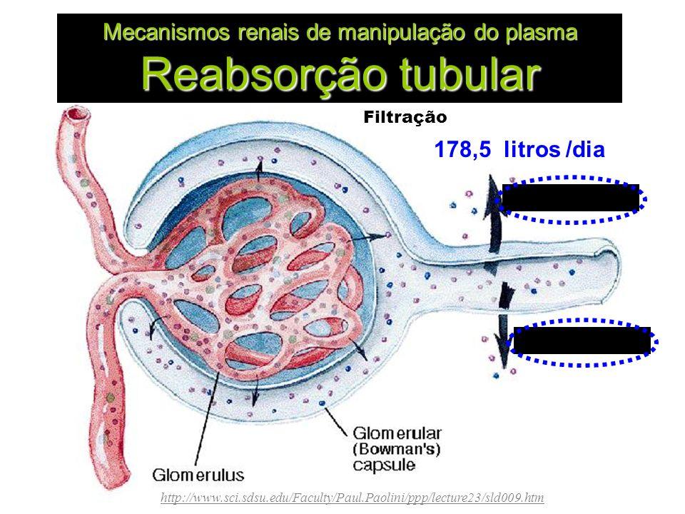 Mecanismos renais de manipulação do plasma Reabsorção tubular http://www.sci.sdsu.edu/Faculty/Paul.Paolini/ppp/lecture23/sld009.htm 178,5 litros /dia Filtração Reabsorção