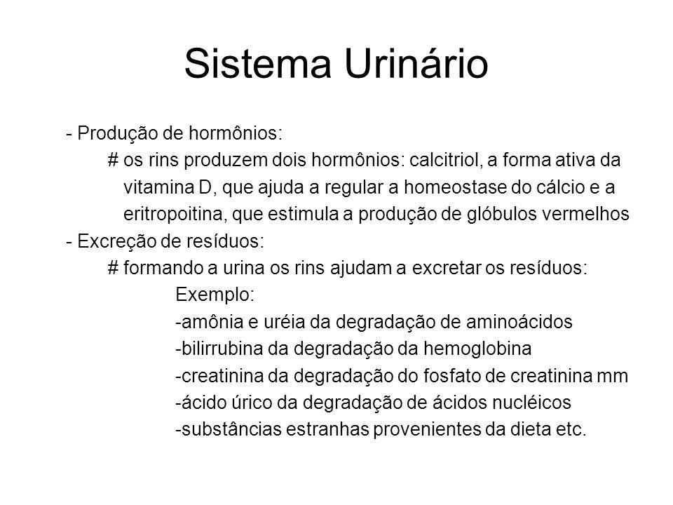 Sistema Urinário - Produção de hormônios: # os rins produzem dois hormônios: calcitriol, a forma ativa da vitamina D, que ajuda a regular a homeostase do cálcio e a eritropoitina, que estimula a produção de glóbulos vermelhos - Excreção de resíduos: # formando a urina os rins ajudam a excretar os resíduos: Exemplo: -amônia e uréia da degradação de aminoácidos -bilirrubina da degradação da hemoglobina -creatinina da degradação do fosfato de creatinina mm -ácido úrico da degradação de ácidos nucléicos -substâncias estranhas provenientes da dieta etc.