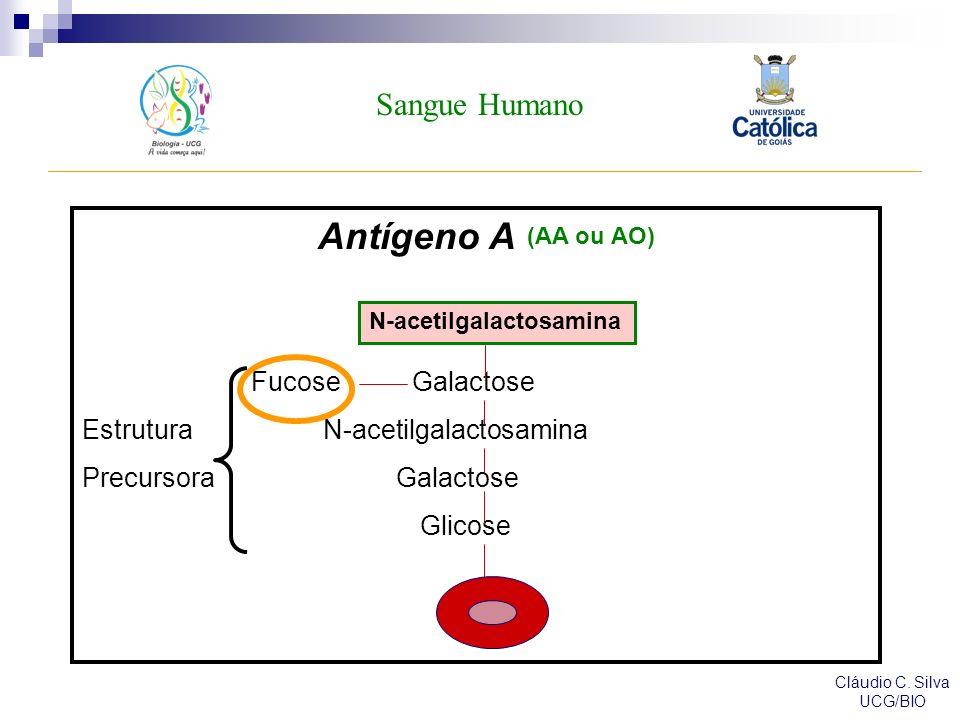 Sangue Humano Cláudio C.