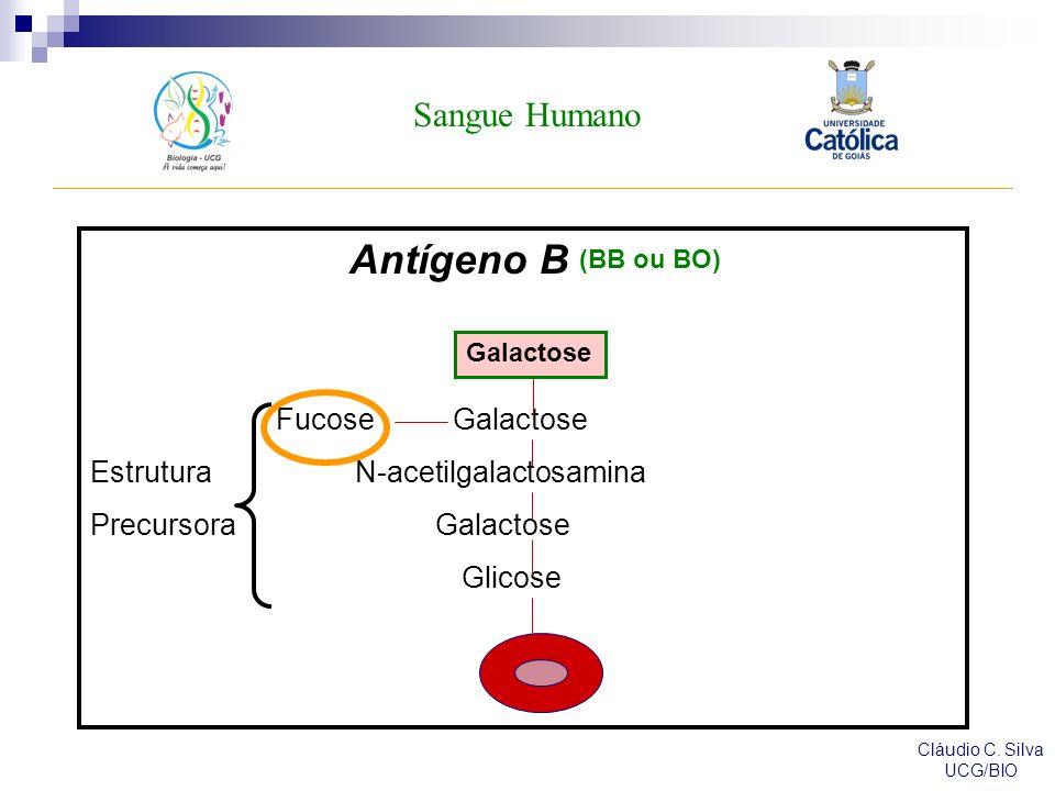 Sangue Humano Cláudio C.Silva UCG/BIO Sistema MN: K.