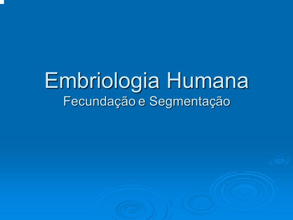 Embriologia Humana Fecundação e Segmentação