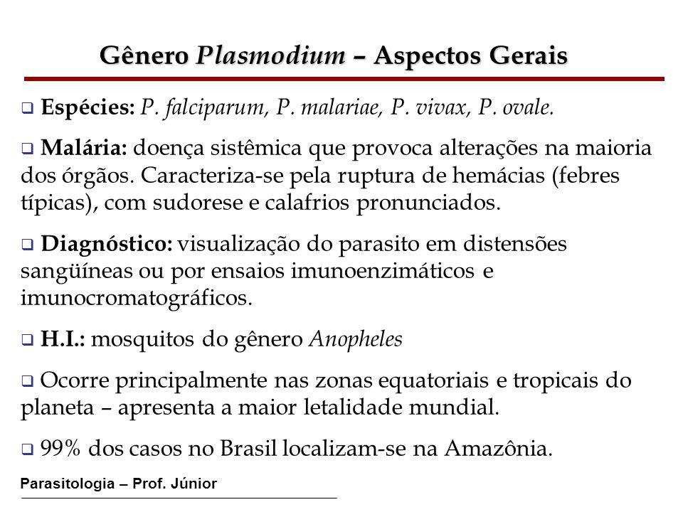 Gênero Plasmodium – Aspectos Gerais Espécies: P. falciparum, P. malariae, P. vivax, P. ovale. Malária: doença sistêmica que provoca alterações na maio