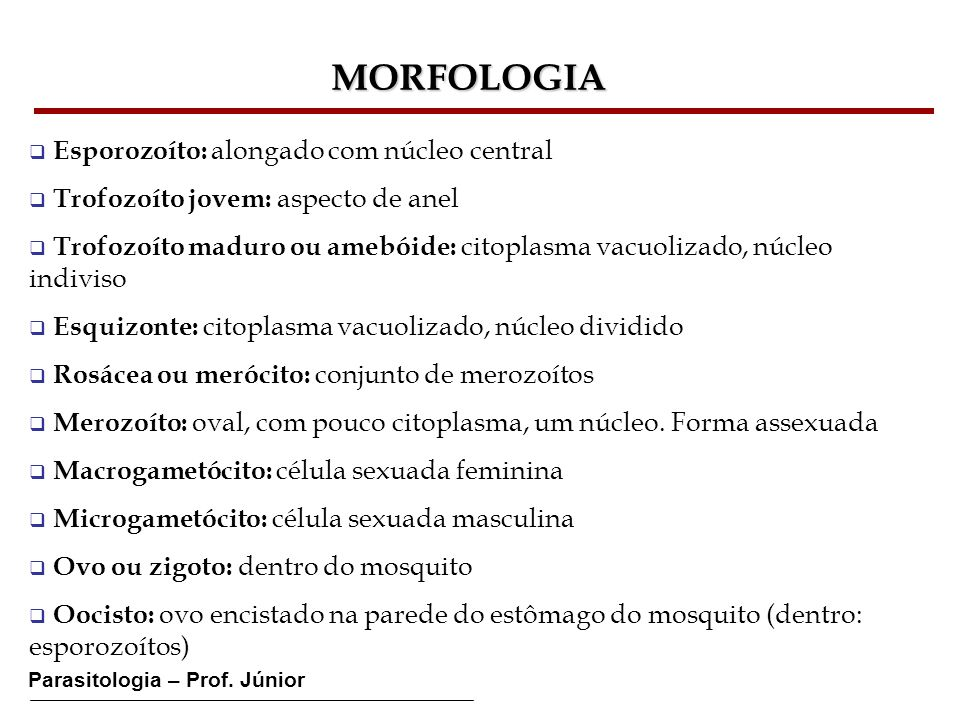 Parasitologia – Prof. Júnior MORFOLOGIA Esporozoíto: alongado com núcleo central Trofozoíto jovem: aspecto de anel Trofozoíto maduro ou amebóide: cito
