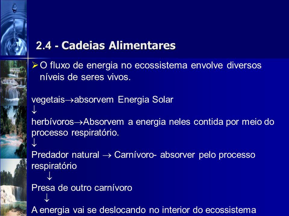 2.4 - Cadeias Alimentares O fluxo de energia no ecossistema envolve diversos níveis de seres vivos. vegetais absorvem Energia Solar herbívoros Absorve