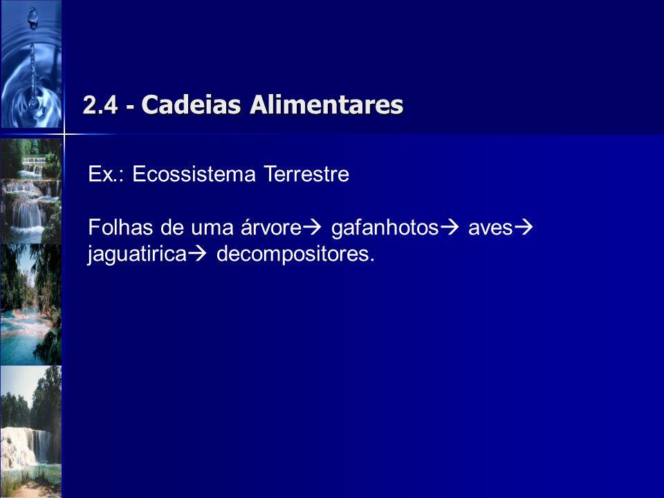 2.4 - Cadeias Alimentares Ex.: Ecossistema Terrestre Folhas de uma árvore gafanhotos aves jaguatirica decompositores.