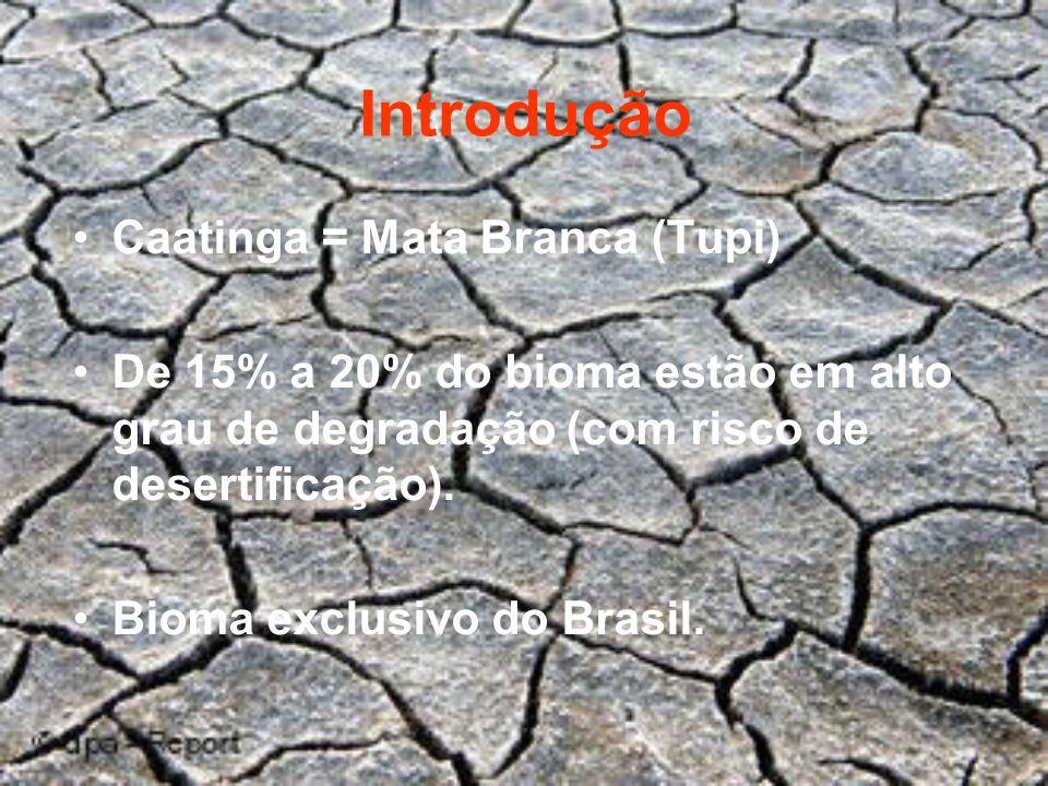 Introdução Caatinga = Mata Branca (Tupi) De 15% a 20% do bioma estão em alto grau de degradação (com risco de desertificação). Bioma exclusivo do Bras