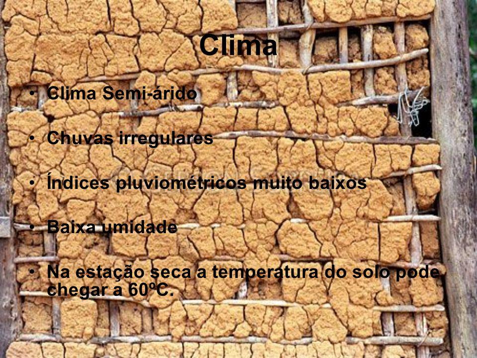 Clima Clima Semi-árido Chuvas irregulares Índices pluviométricos muito baixos Baixa umidade Na estação seca a temperatura do solo pode chegar a 60ºC.