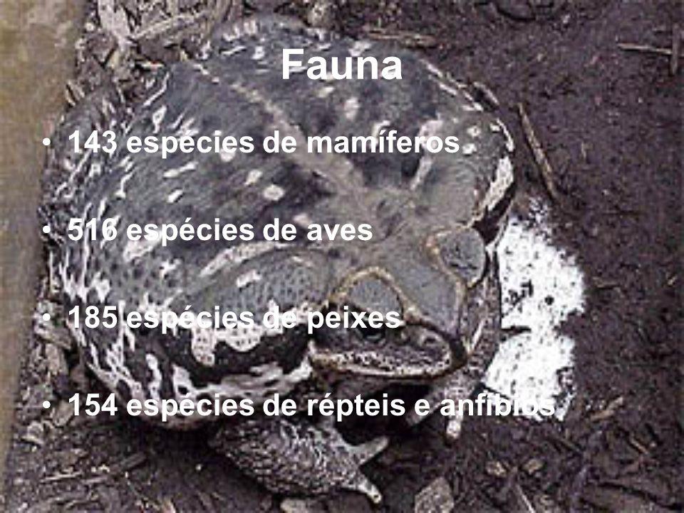 Fauna 143 espécies de mamíferos 516 espécies de aves 185 espécies de peixes 154 espécies de répteis e anfíbios
