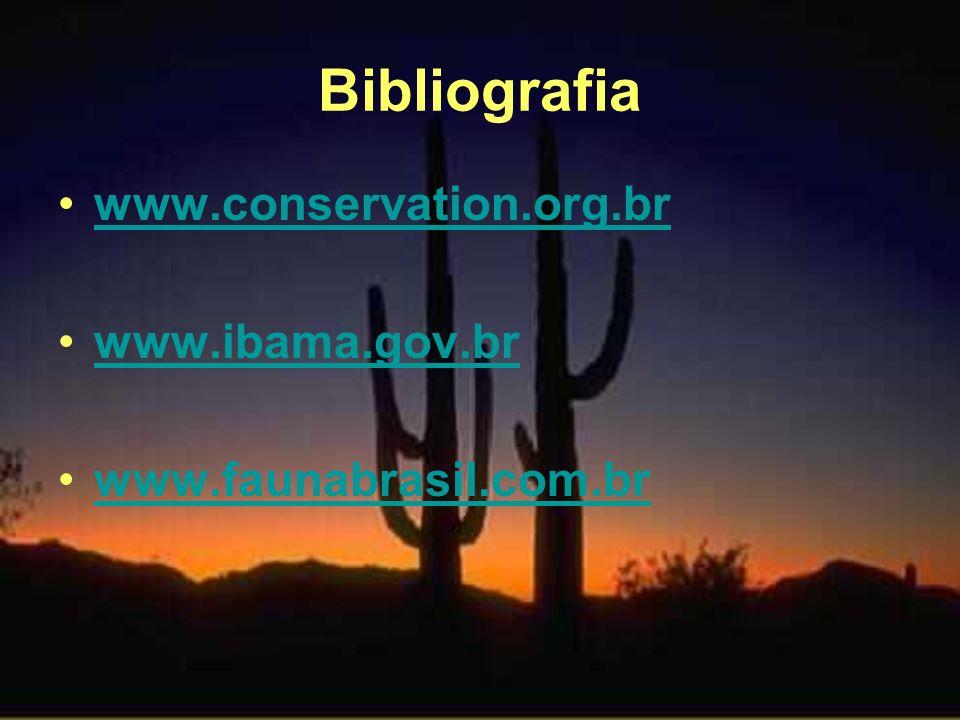 Bibliografia www.conservation.org.br www.ibama.gov.br www.faunabrasil.com.br