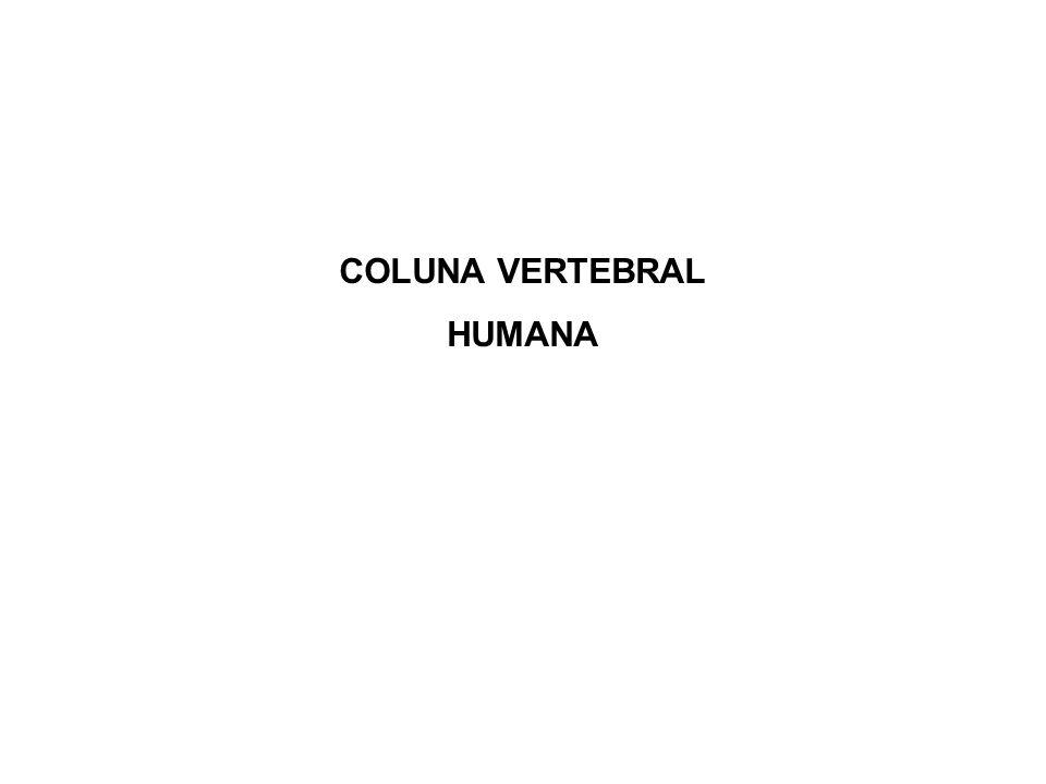 Vértebras Programa de Educação Postural – Érica Verderi - 2005