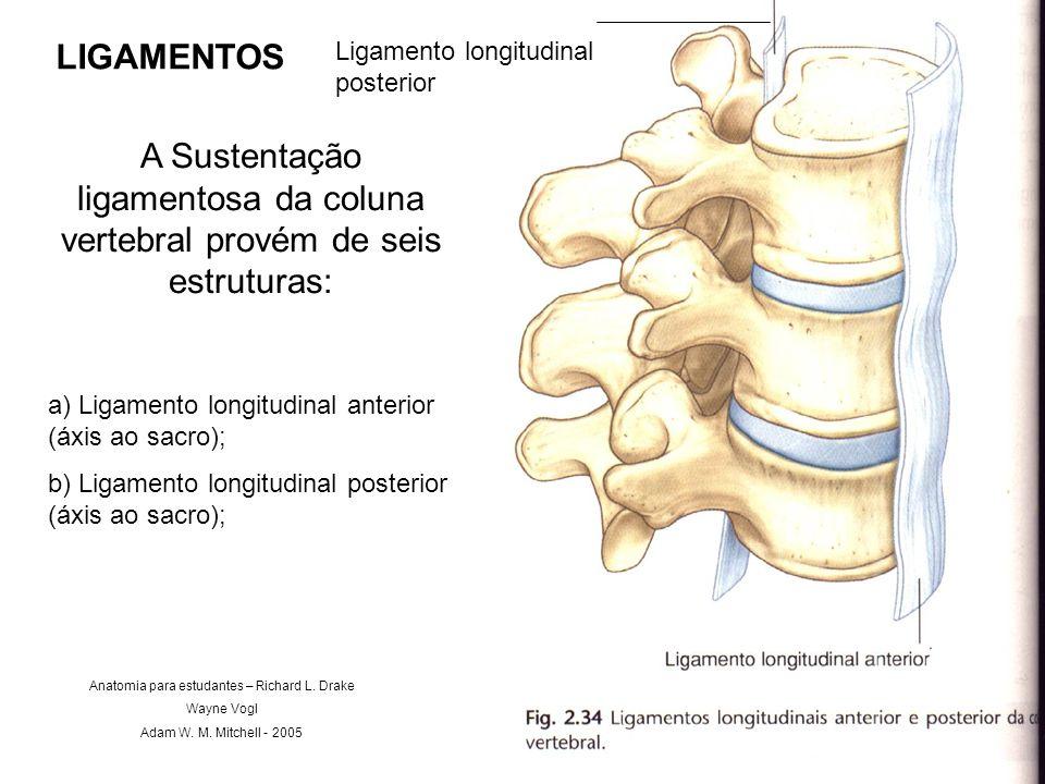 LIGAMENTOS A Sustentação ligamentosa da coluna vertebral provém de seis estruturas: a) Ligamento longitudinal anterior (áxis ao sacro); b) Ligamento l