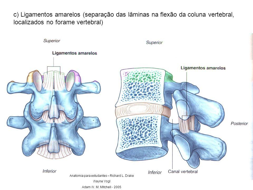 c) Ligamentos amarelos (separação das lâminas na flexão da coluna vertebral, localizados no forame vertebral) Anatomia para estudantes – Richard L. Dr