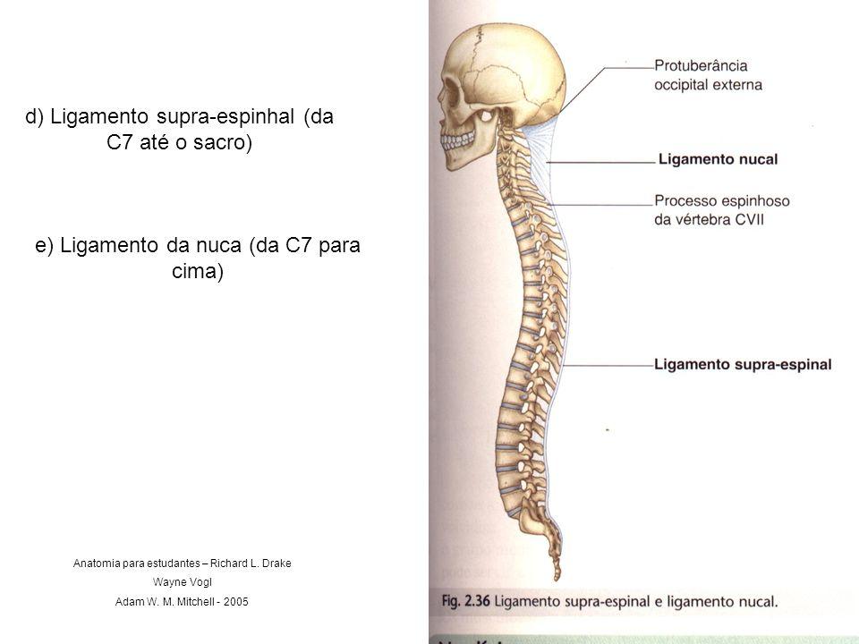 d) Ligamento supra-espinhal (da C7 até o sacro) e) Ligamento da nuca (da C7 para cima) Anatomia para estudantes – Richard L. Drake Wayne Vogl Adam W.