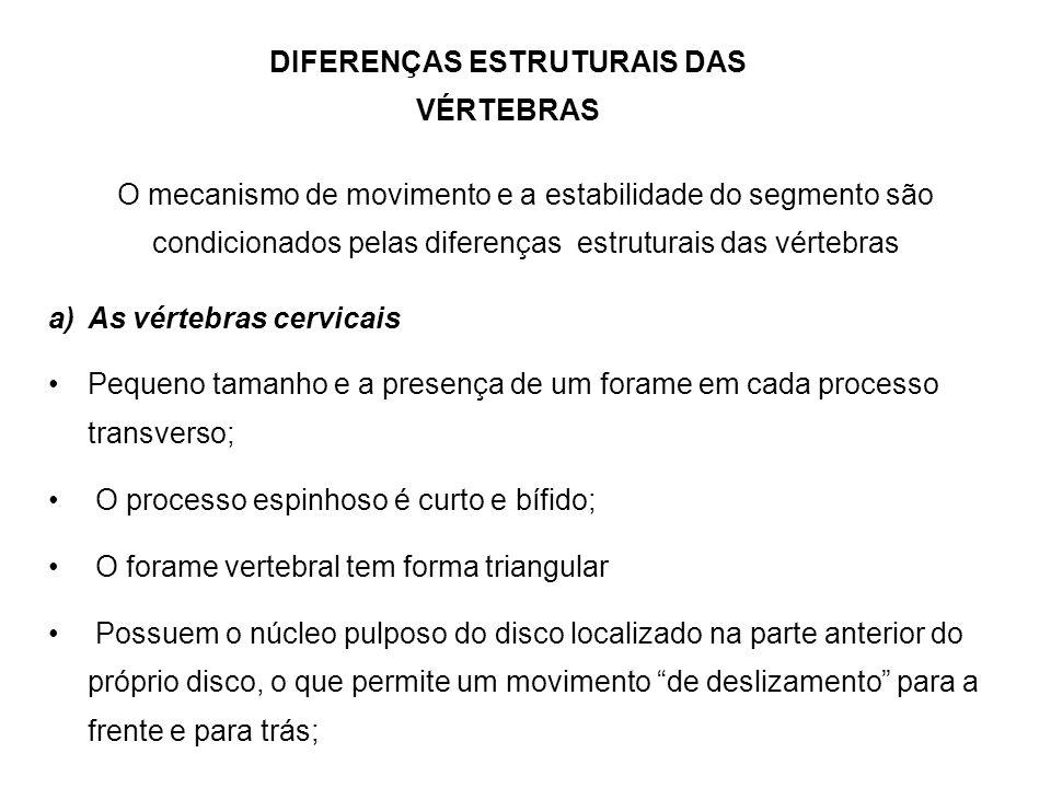 DIFERENÇAS ESTRUTURAIS DAS VÉRTEBRAS O mecanismo de movimento e a estabilidade do segmento são condicionados pelas diferenças estruturais das vértebra