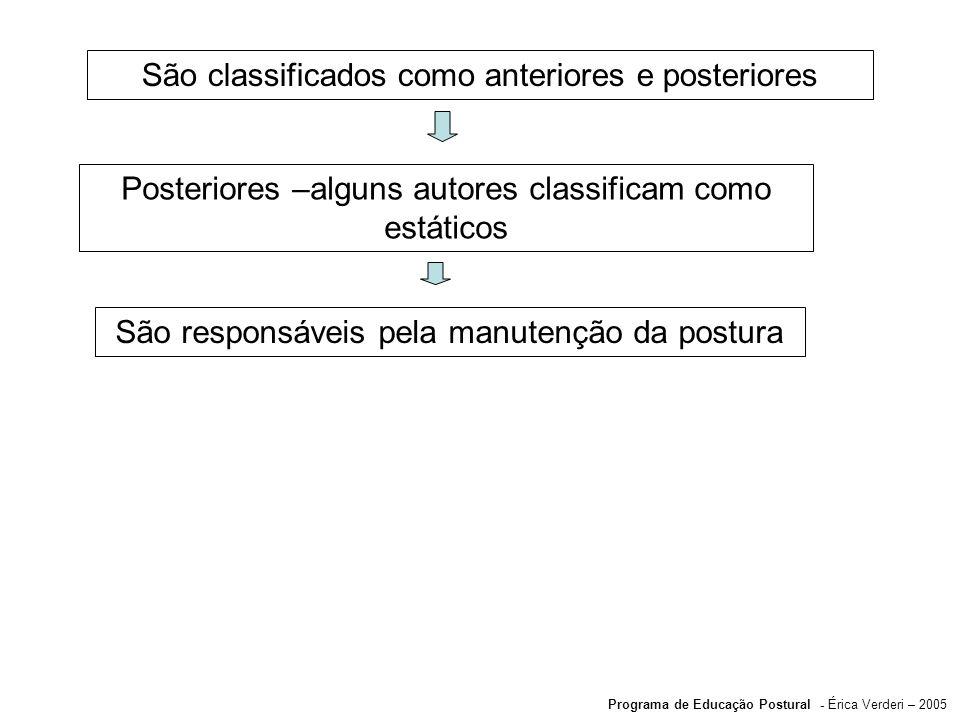 São classificados como anteriores e posteriores Posteriores –alguns autores classificam como estáticos São responsáveis pela manutenção da postura Pro