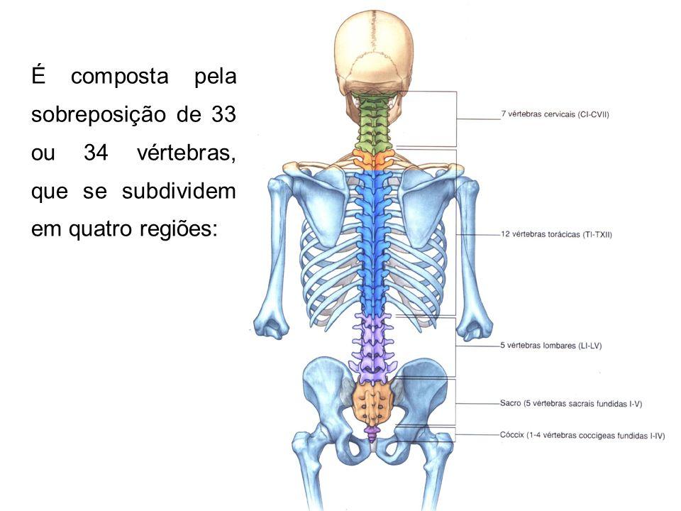 Curvaturas da coluna vertebral Os dois requisitos mecânicos fundamentais da coluna vertebral são: a rigidez isto é, a eficiente estática antigravitacional; a flexibilidade, isto é, a possibilidade de uma grande amplitude de movimentos.