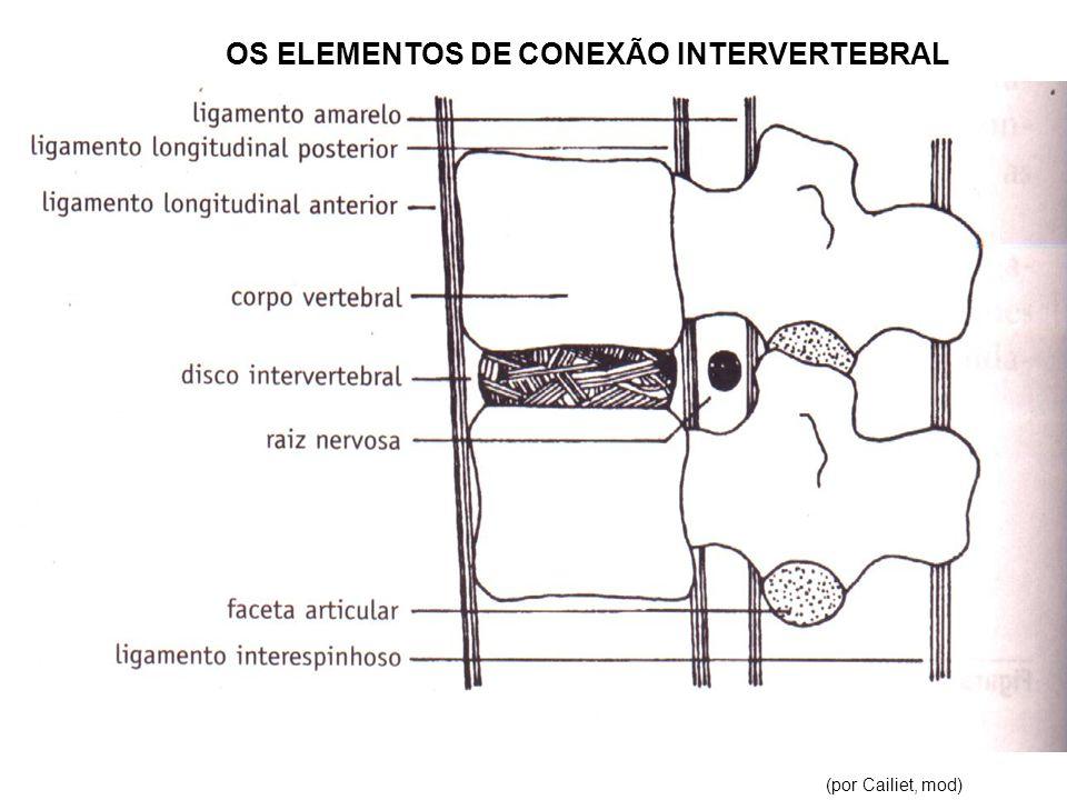 (por Cailiet, mod) OS ELEMENTOS DE CONEXÃO INTERVERTEBRAL