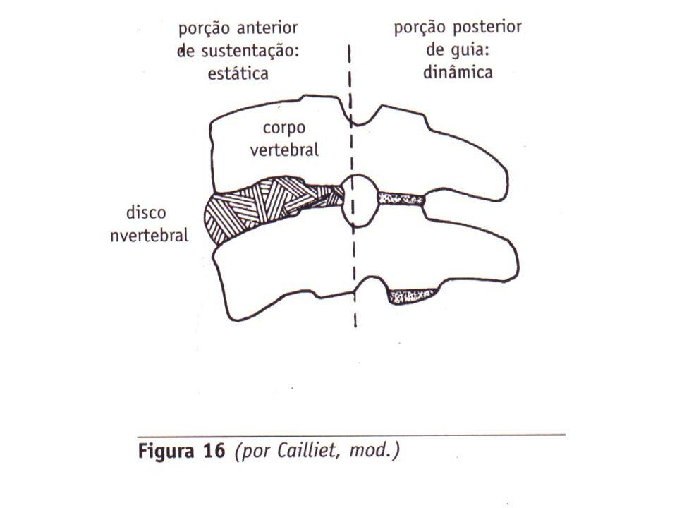 LIGAMENTOS A Sustentação ligamentosa da coluna vertebral provém de seis estruturas: a) Ligamento longitudinal anterior (áxis ao sacro); b) Ligamento longitudinal posterior (áxis ao sacro); Ligamento longitudinal posterior Anatomia para estudantes – Richard L.