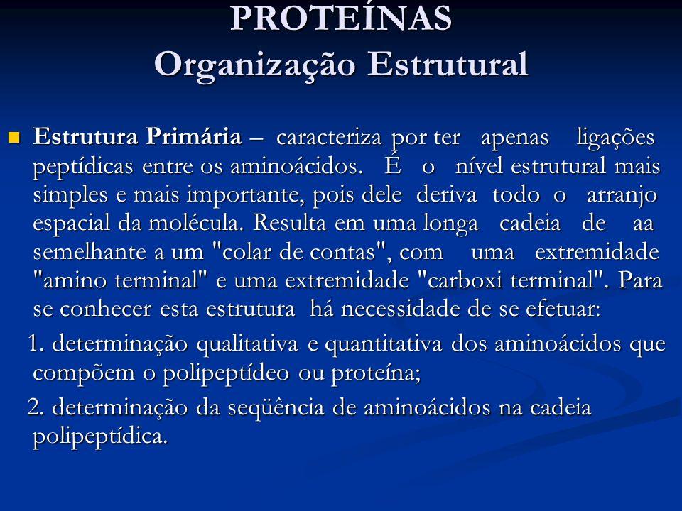 PROTEÍNAS Organização Estrutural Estrutura Primária – caracteriza por ter apenas ligações peptídicas entre os aminoácidos. É o nível estrutural mais s
