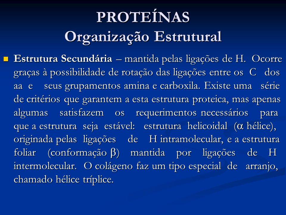 PROTEÍNAS Organização Estrutural Estrutura Secundária – mantida pelas ligações de H. Ocorre graças à possibilidade de rotação das ligações entre os C