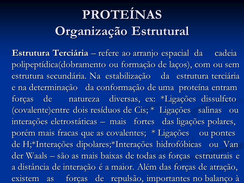 PROTEÍNAS Organização Estrutural Estrutura Terciária – refere ao arranjo espacial da cadeia polipeptídica(dobramento ou formação de laços), com ou sem