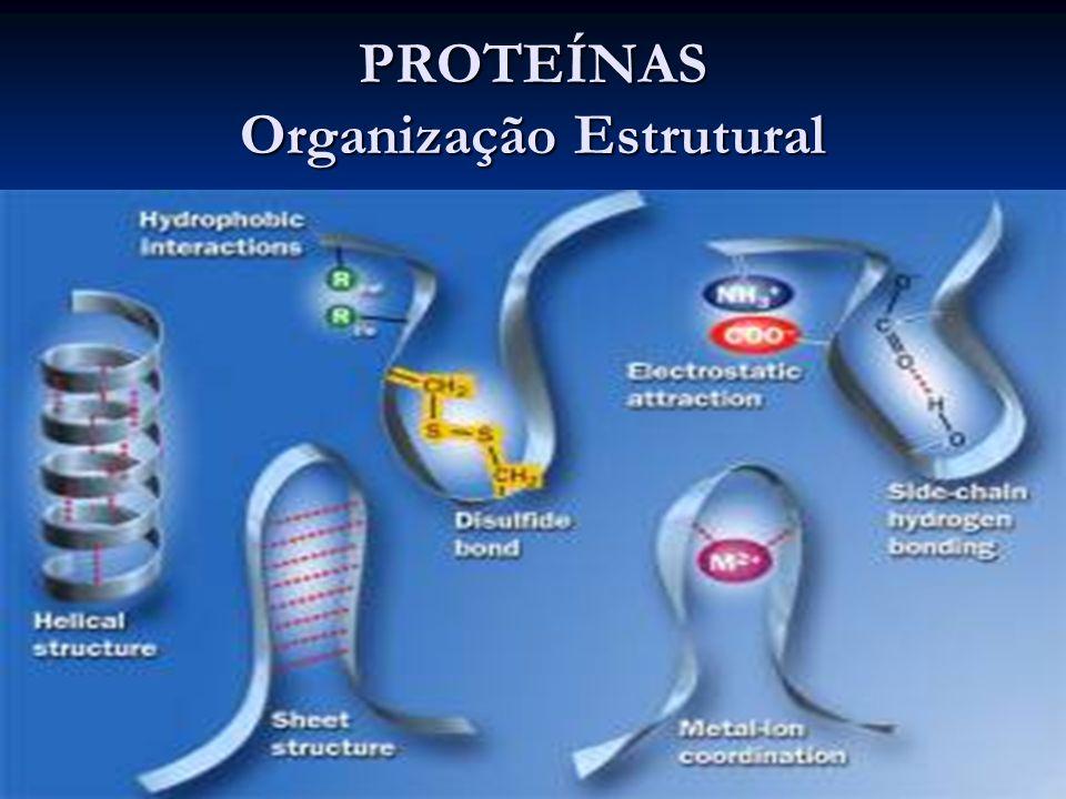 PROTEÍNAS Organização Estrutural