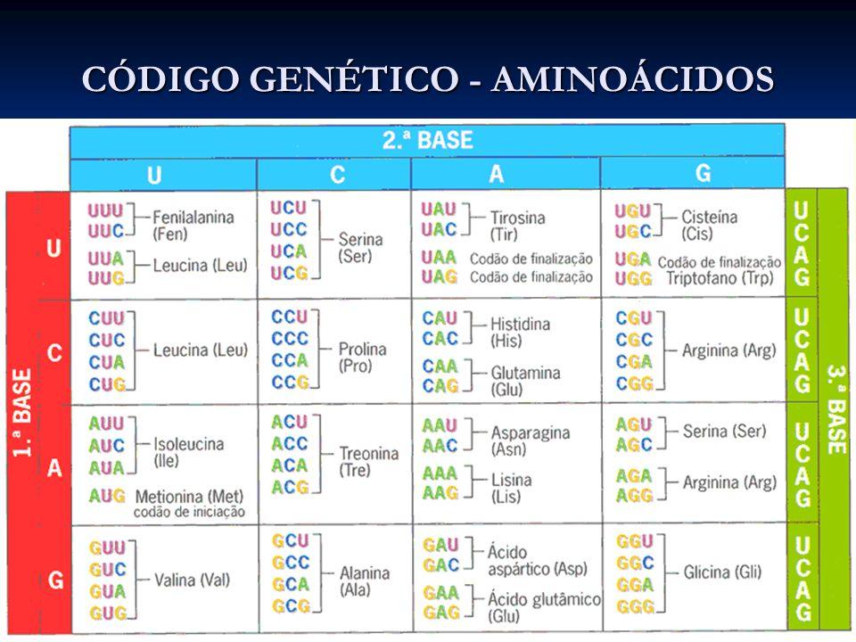PROTEÍNAS Organização Estrutural Estrutura Primária – caracteriza por ter apenas ligações peptídicas entre os aminoácidos.