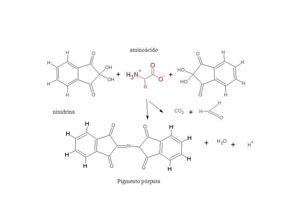 aminoácido Pigmento púrpura