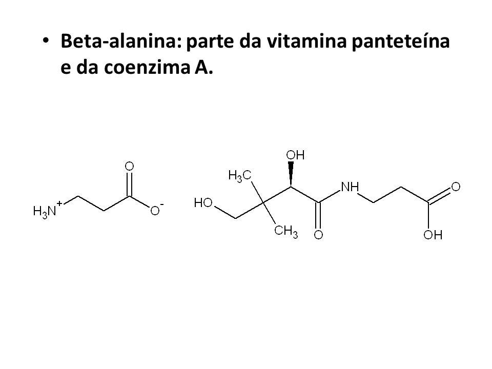 Beta-alanina: parte da vitamina panteteína e da coenzima A.