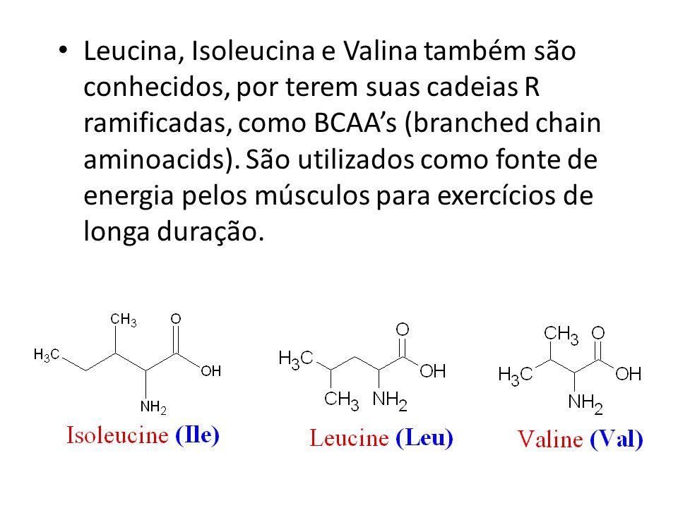 Leucina, Isoleucina e Valina também são conhecidos, por terem suas cadeias R ramificadas, como BCAAs (branched chain aminoacids). São utilizados como