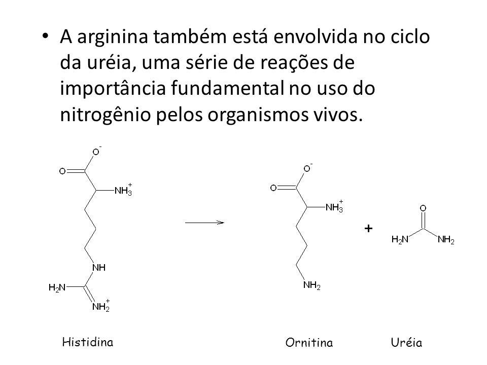 A arginina também está envolvida no ciclo da uréia, uma série de reações de importância fundamental no uso do nitrogênio pelos organismos vivos. Histi