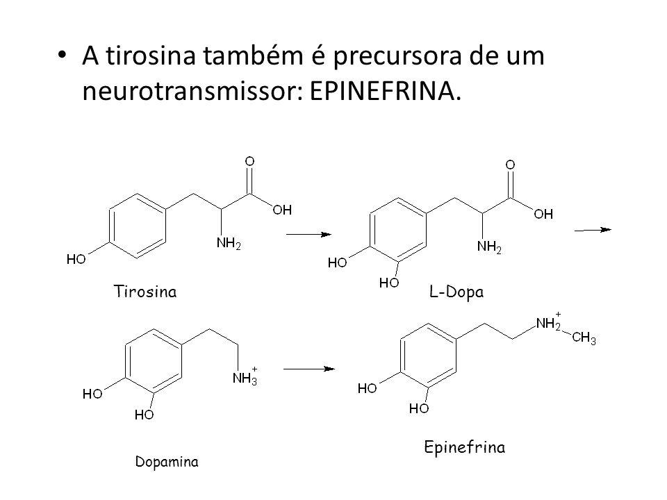 A tirosina também é precursora de um neurotransmissor: EPINEFRINA. TirosinaL-Dopa Dopamina Epinefrina