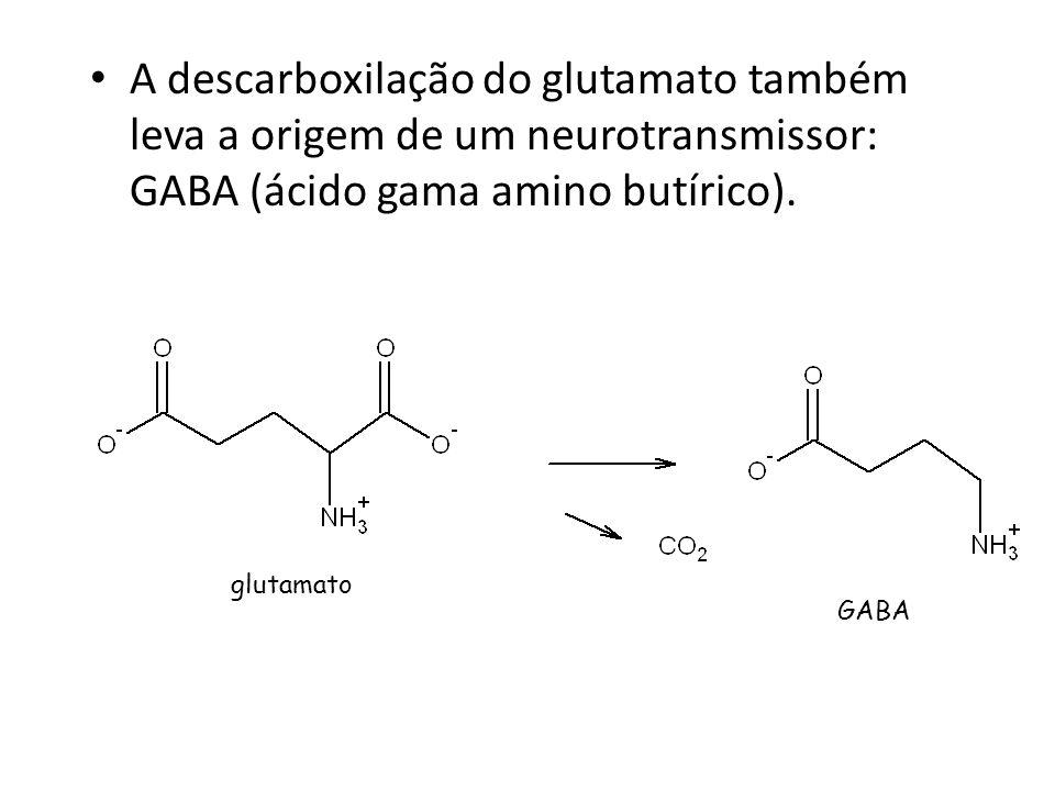 A descarboxilação do glutamato também leva a origem de um neurotransmissor: GABA (ácido gama amino butírico). glutamato GABA