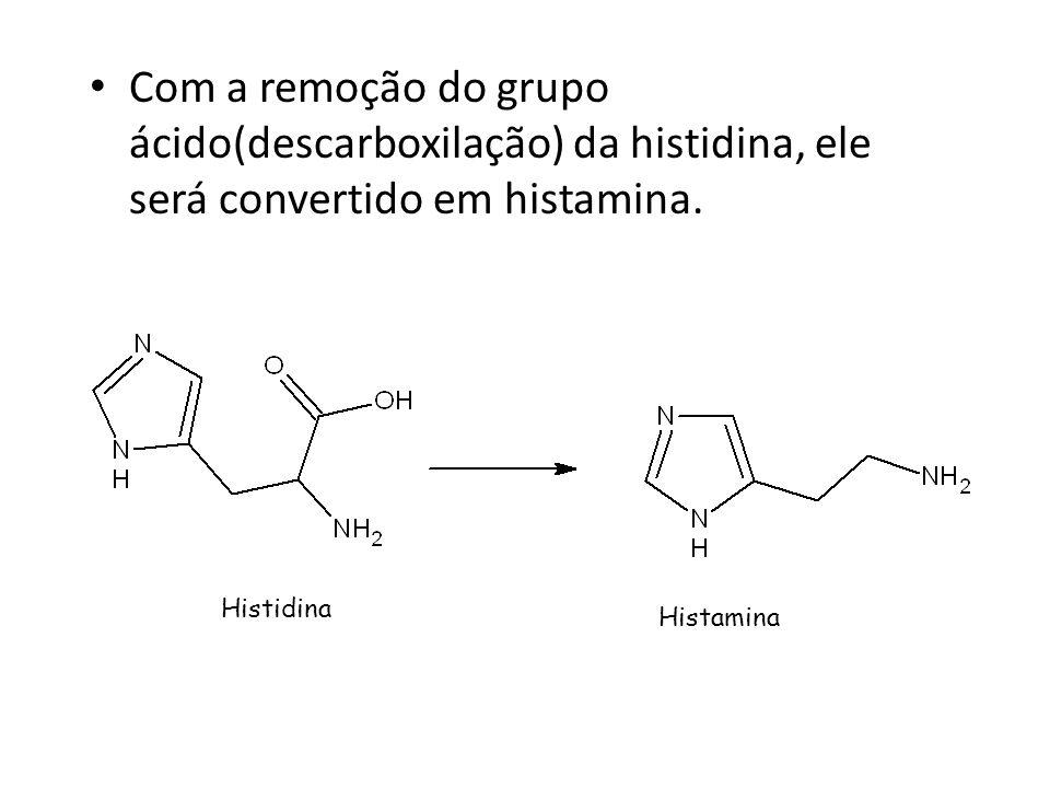 Com a remoção do grupo ácido(descarboxilação) da histidina, ele será convertido em histamina. Histidina Histamina