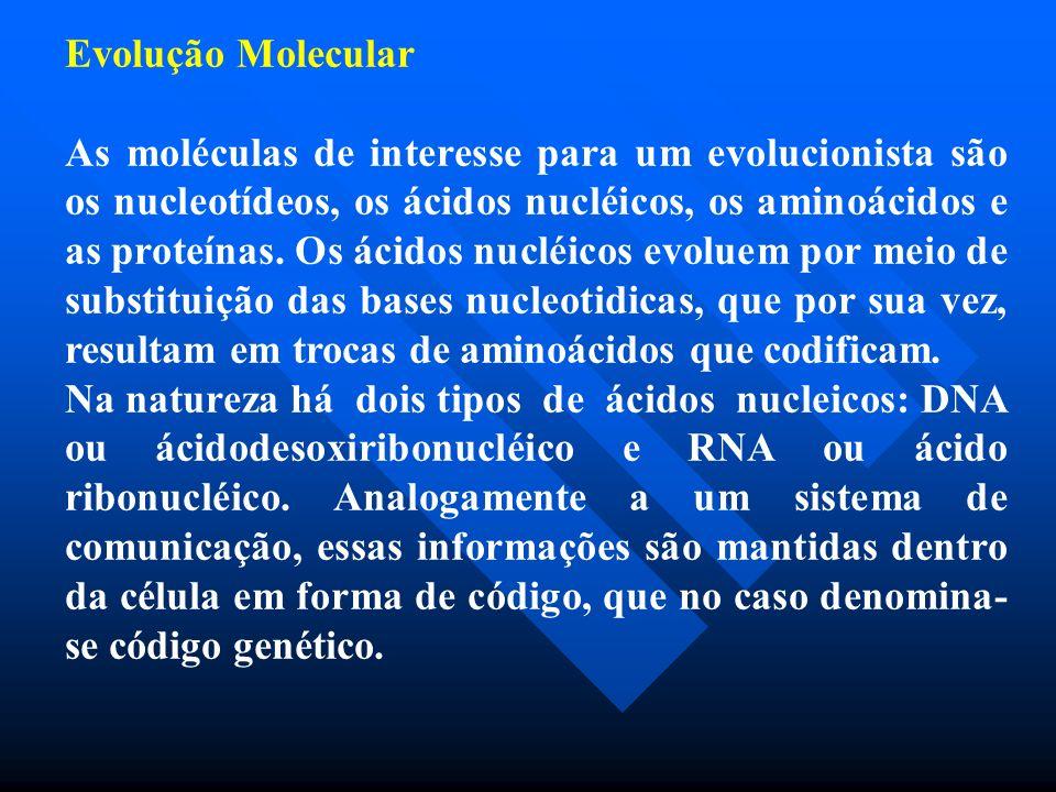 Evolução Molecular As moléculas de interesse para um evolucionista são os nucleotídeos, os ácidos nucléicos, os aminoácidos e as proteínas. Os ácidos