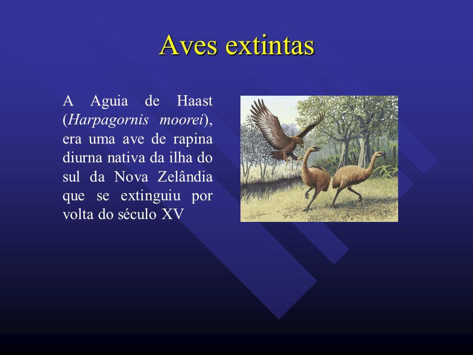 Aves extintas A Aguia de Haast (Harpagornis moorei), era uma ave de rapina diurna nativa da ilha do sul da Nova Zelândia que se extinguiu por volta do