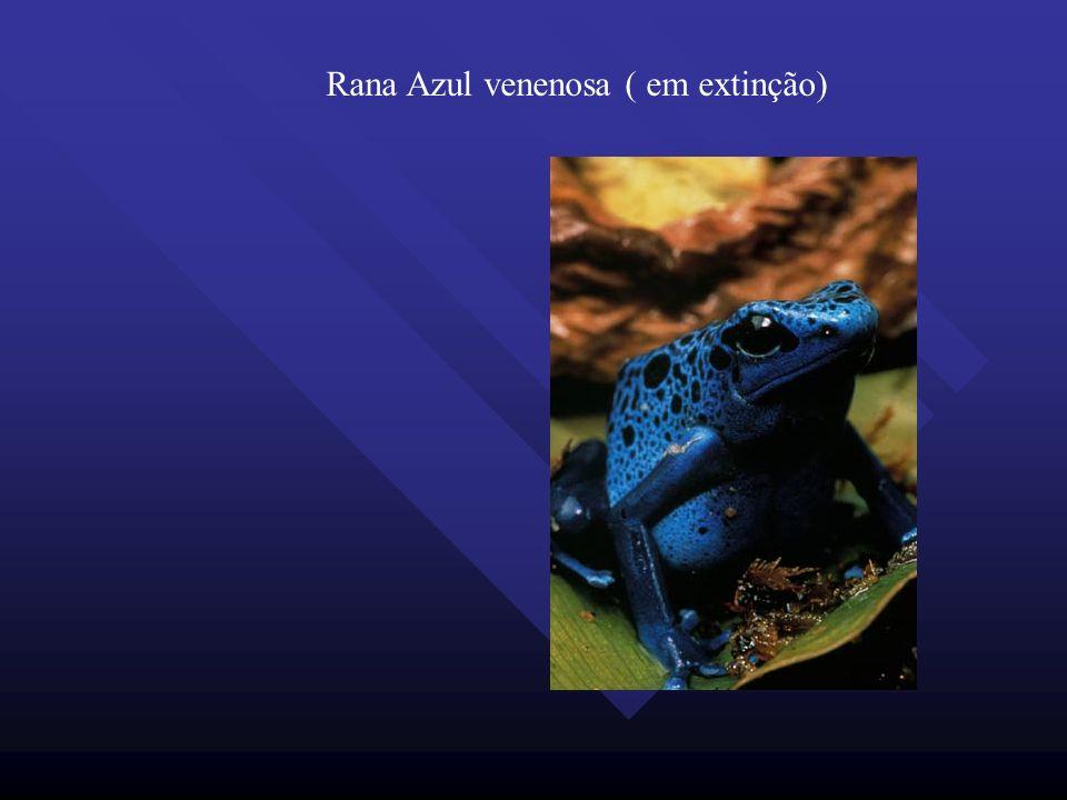 Rana Azul venenosa ( em extinção)
