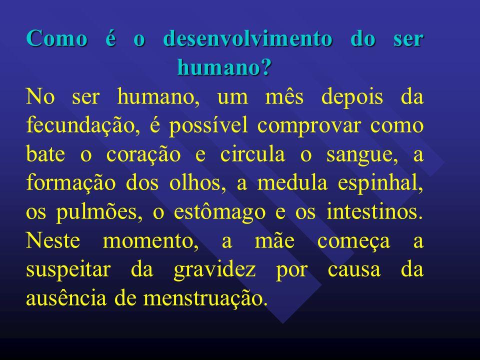 Como é o desenvolvimento do ser humano? Como é o desenvolvimento do ser humano? No ser humano, um mês depois da fecundação, é possível comprovar como