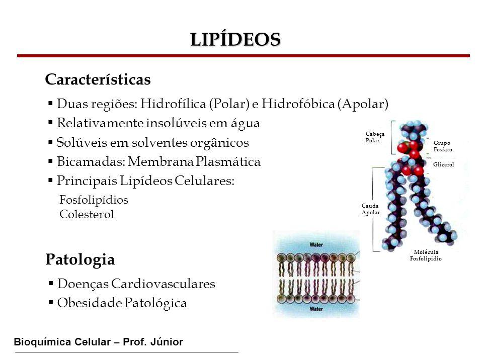 Bioquímica Celular – Prof. Júnior LIPÍDEOS Características Duas regiões: Hidrofílica (Polar) e Hidrofóbica (Apolar) Relativamente insolúveis em água S